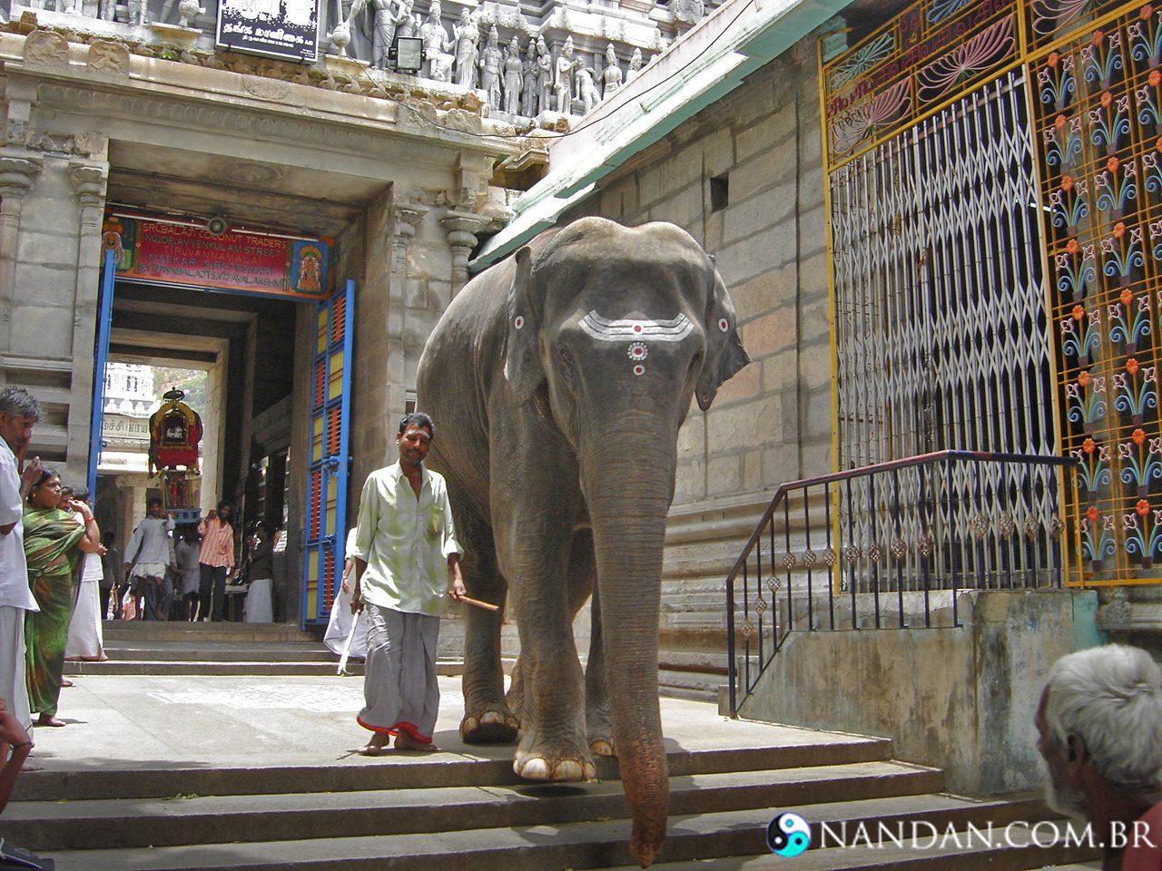 Elefante no Templo de Arunachala
